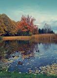 Vintage photo of beautiful autumn landscape - the autumn pond Royalty Free Stock Image
