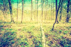 Vintage photo of beautiful green springtime forest landscape Stock Image