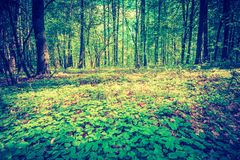 Vintage photo of beautiful green springtime forest landscape Royalty Free Stock Photo