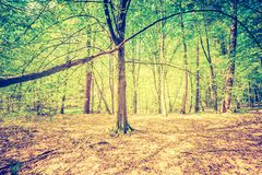 Vintage photo of beautiful green springtime forest landscape Stock Photography