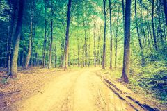 Vintage photo of beautiful green springtime forest landscape Royalty Free Stock Photos