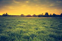 Vintage photo of beautiful landscape with morning meadow Stock Photography
