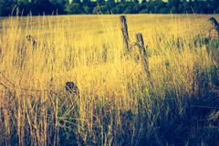 Vintage photo of beautiful landscape with morning meadow Stock Images
