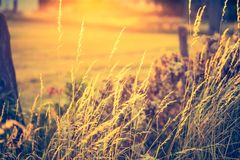 Vintage photo of beautiful landscape with morning meadow Royalty Free Stock Image