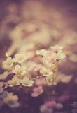 Vintage photo of beautiful small flowers. Useful as background Stock Photography
