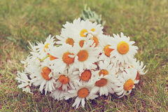 Vintage photo of the bouquet of daisies on fresh green grass Stock Photography
