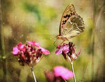 Vintage photo of a butterfly Royalty Free Stock Photography