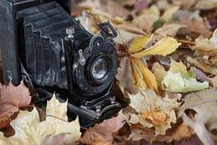 Vintage photo camera  in autumn park Stock Photo