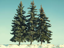 Vintage photo christmas trees Royalty Free Stock Photography