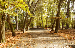 Vintage photo of curving road in autumn park Royalty Free Stock Photo