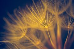 Vintage photo of dandelion seeds. In close up. Natural background Royalty Free Stock Photos