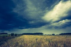 Vintage photo of dark stormy clouds over corn field Royalty Free Stock Photography
