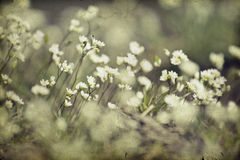 Vintage photo of flower field Royalty Free Stock Photography