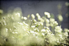 Vintage photo of flower field Royalty Free Stock Photo