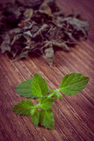 Vintage photo, Fresh and dried lemon balm on wooden table, herbalism Royalty Free Stock Photography