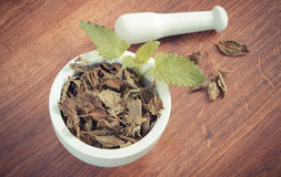 Vintage photo, Fresh green and dried lemon balm with mortar, herbalism, alternative medicine Stock Photography