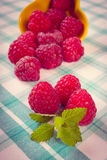 Vintage photo, Fresh raspberries and lemon balm on checkered tablecloth, healthy food. Vintage photo, Fresh raspberries and leaf of lemon balm on checkered Royalty Free Stock Image