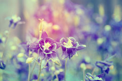 Vintage photo of garden flowers Stock Photo