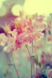Vintage photo of garden flowers in sunset Stock Images