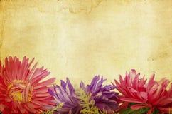Vintage photo of gerbera daisy flowers Stock Image