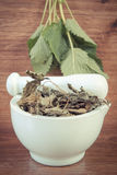 Vintage photo, green and dried lemon balm in mortar, concept of herbalism and alternative medicine Royalty Free Stock Image