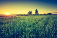Vintage photo of green field landscape Royalty Free Stock Image