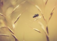 Vintage photo of green fly sitting on grass Stock Photos