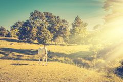 Vintage photo of a grey horse running in a meadow on a green slope of the hill royalty free stock image