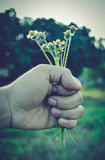 Vintage photo, hand holding flowers Stock Photography