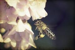 Vintage photo of honeybee Royalty Free Stock Photography