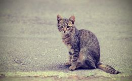 Vintage photo of a kitten on the street Royalty Free Stock Images