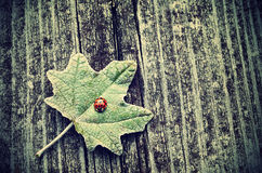 Vintage photo of ladybug on green leaf Stock Photos