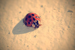 Vintage photo of ladybug Royalty Free Stock Images