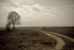 Vintage photo landscape. Old looking photo ,tree, car marks Stock Photography
