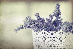Vintage photo of Lavender Royalty Free Stock Photos