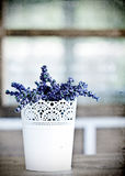 Vintage photo of Lavender Stock Photography