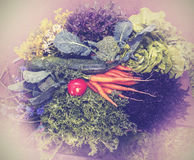 Vintage photo of mixed fresh healthy vegetables Royalty Free Stock Image