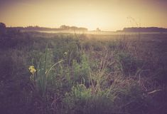 Vintage photo of morning foggy meadow in summer. Rural landscape Stock Photos