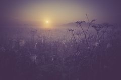 Vintage photo of morning foggy meadow in summer. Rural landscape Royalty Free Stock Photos