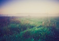Vintage photo of morning foggy meadow in summer. Rural landscape Royalty Free Stock Photo