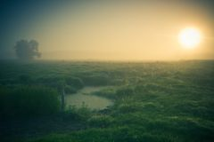 Vintage photo of morning foggy meadow in summer. Rural landscape Royalty Free Stock Photography