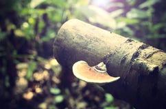Vintage photo of mushroom Royalty Free Stock Images