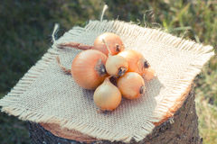 Vintage photo, Natural unpeeled onions on wooden stump Stock Photos