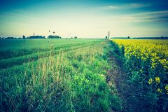 Vintage Photo Of Blooming Rapeseed Field At Sunrise Stock Images