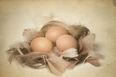 Vintage Photo Of Eggs And Feathers Stock Photos