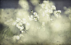 Vintage Photo Of Flower Field Royalty Free Stock Images