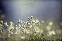 Vintage Photo Of Flower Field Stock Photography