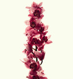 Vintage photo with orchid flowers Stock Photo