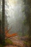 Vintage photo of pathway through the autumn woods Royalty Free Stock Photos
