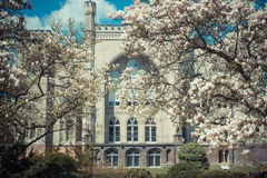 Vintage photo, Poland, Greater province. Old castle in Kornik with magnolia flowers Royalty Free Stock Images